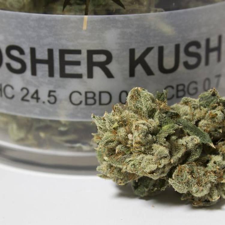 Kosher Kush strain information