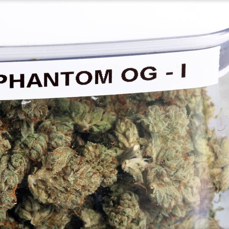 Phantom OG strain image