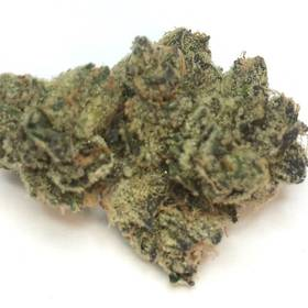 Girl Scout Cookies -  - Hybrid