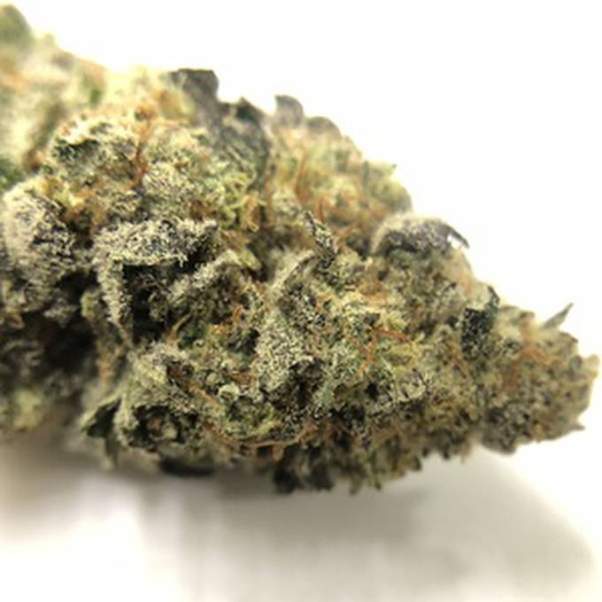 GMO Cookies Strain, Grown in Cali